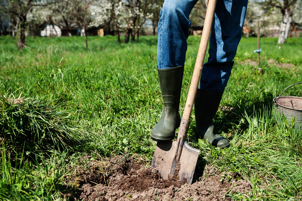 Transplanting Shrubs made easy in Waukesha County this spring ...