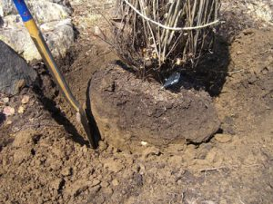 5-Dig-and-Remove-soil