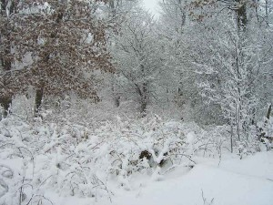 winter_in_wisconsin_landscaping_2