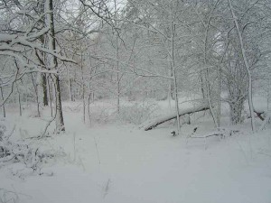 winter_in_wisconsin_landscaping_7