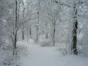 winter_landscape_wisconsin