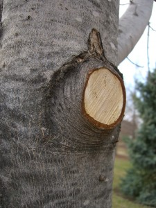 How to Prune Small Trees in Waukesha County
