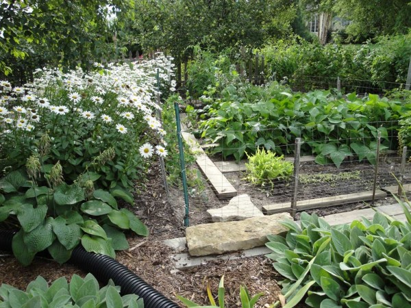 Planning a Vegetable Garden in your Waukesha yard
